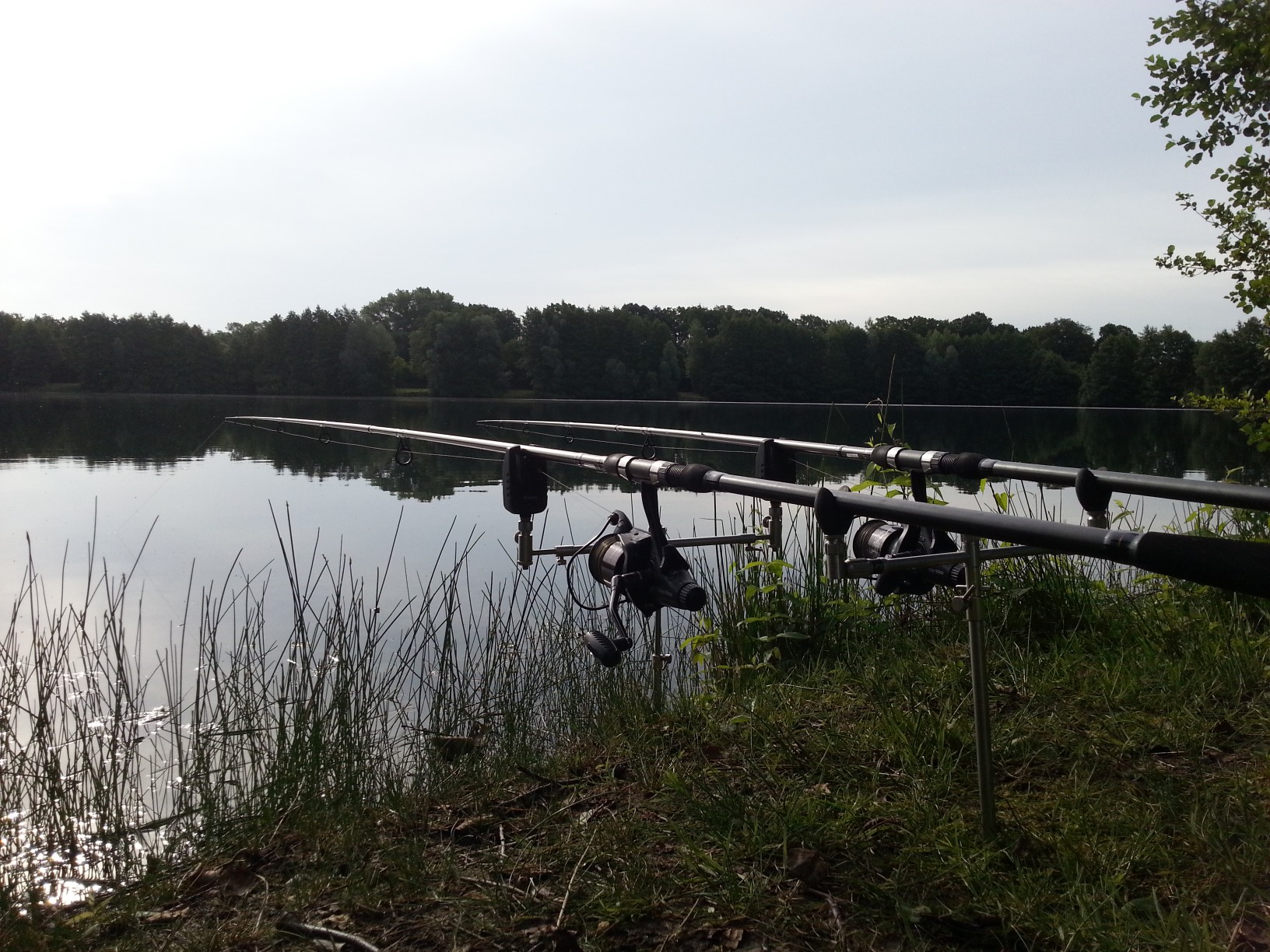 Sportfischerei-Verein Burgdorf e.V.